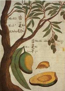 Gauslines Blog Archive Soal Psikotes Menggambar Pohon Nangka